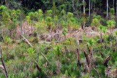Nyazeeländska subtropiska våtmarker Arkivbild