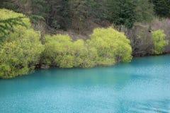 Nyazeeländska träd under höst fotografering för bildbyråer