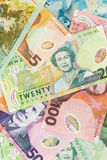 Nyazeeländska pengar Arkivbild