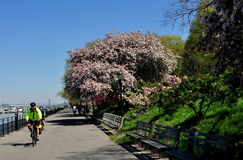 NYC: Brzeg rzeki Parkowy deptak Fotografia Royalty Free