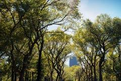 NYC-Central Parkträd Arkivfoto