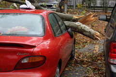 NYC Damage - Hurricane Sandy. Fallen trees on a car in lower east side Manhattan after Hurricane Sandy hits NYC royalty free stock photos