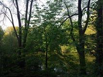 Nyc del Central Park Fotografie Stock Libere da Diritti