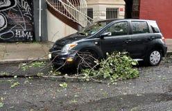 NYC: Filiale di albero scolata dall'uragano Irene Fotografia Stock Libera da Diritti