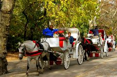 NYC: Hansom Cabs in Central Park. A row of handsome white horse-drawn hansom cabs take tourists for leisurely rides through NYC's beautiful Central Park stock image