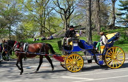 NYC: Hansom Carriage in Central Park. A hansom carriage pulled by a chestnut brown horse taking tourists for a ride on the inner roadway of NYC's Central Park stock photography