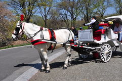 NYC: Horse Carriage in Central Park. A gleaming white horse pulling a hansom carriage at Cherry Hill in New York City's Central Park royalty free stock photography