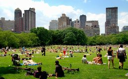 NYC: Il prato delle pecore in Central Park Immagini Stock