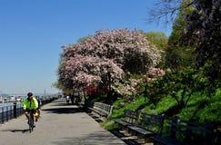 NYC: Passeggiata del parco della riva del fiume Fotografia Stock Libera da Diritti