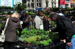 NYC: Piante d'acquisto della gente al mercato dell'agricoltore immagine stock libera da diritti