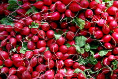 NYC: Radishes at Farmer's Market. Mounds of farm fresh red radishes on display at a farmer's booth at the famous Union Square Farmer's Market in New York City  ( Stock Photo