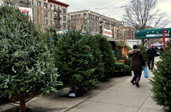 NYC: Sidewalk Christmas Tree Stand Stock Image