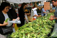 NYC: Union Square Greenmarket stock images