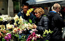 NYC: Woman Buying Orchid Plant Royalty Free Stock Photos