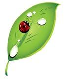 Nyckelpiga på en grön leaf Arkivfoto