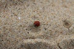 Nyckelpiga på en sandig strand arkivbild