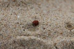 Nyckelpiga på en sandig strand fotografering för bildbyråer