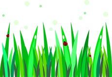 Nyckelpiga på gräs royaltyfri foto
