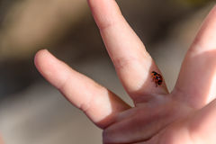 Nyckelpiga på handen för barn` s arkivbild