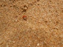 Nyckelpiga på sand Royaltyfri Foto