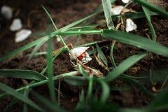 Nyckelpiga under kronblad stort vatten f?r fotografi f?r makro f?r droppgreenleaf arkivfoto