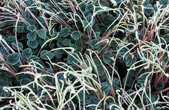 Nyckfull bakgrund av växter Fotografering för Bildbyråer