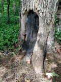 Nyckfull gnomdörr i grunden av ett träd Royaltyfri Foto