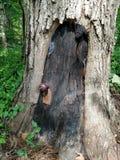 Nyckfull gnomdörr i grunden av ett träd Royaltyfri Fotografi