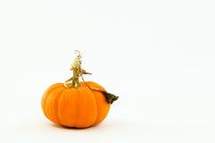 nyckfull liten stem för lockig orange pumpa royaltyfria bilder