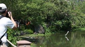 Nycticorax do Nycticorax e Egretta Garzetta na árvore em Daan Forest Park filme