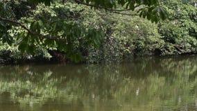 Nycticorax y Egretta Garzetta del Nycticorax en el árbol en Daan Forest Park almacen de metraje de vídeo