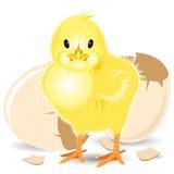 nyfödd fågelunge Royaltyfria Bilder