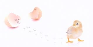 Nyfödd fågelunge. Royaltyfri Fotografi