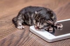 Nyfödd katt nära mobiltelefonen Moderna teknologier för barn royaltyfri foto