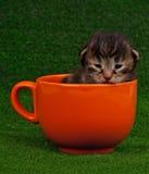 Nyfödd kattunge Arkivbilder