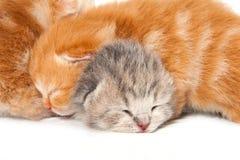 Nyfödd kattunge två royaltyfri foto