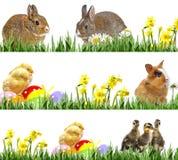Nyfödda hönor och easter ägg, små kaniner och easter ägg royaltyfri bild