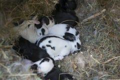 nyfödda kaniner royaltyfri bild