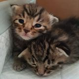 nyfödda kattungar Arkivbilder