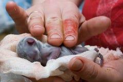 nyfödda kattungar Fotografering för Bildbyråer
