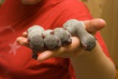 nyfödda kattungar Royaltyfria Foton