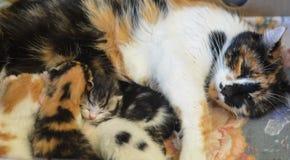 Nyfödda kattungar och moderkatt Arkivbild