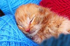 Nyfött behandla som ett barn att sova för katt För apelsinkräm för gulliga härliga små få dagar gammal kattunge för färg Nyfött b Arkivfoton