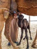 Nyfött behandla som ett barn kamlet Arkivfoton
