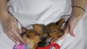 Nyfött sova för valp Vuxen hundkapplöpning i glidare arkivfilmer