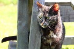 Nyfiken brokig katt Arkivbilder
