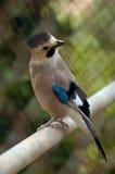 nyfiken fågel Fotografering för Bildbyråer