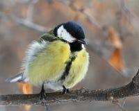 Nyfiken fågel Royaltyfri Foto