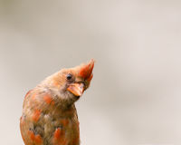 Nyfiken fågel Arkivbilder