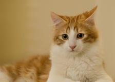 nyfiken familj för katt Royaltyfri Bild